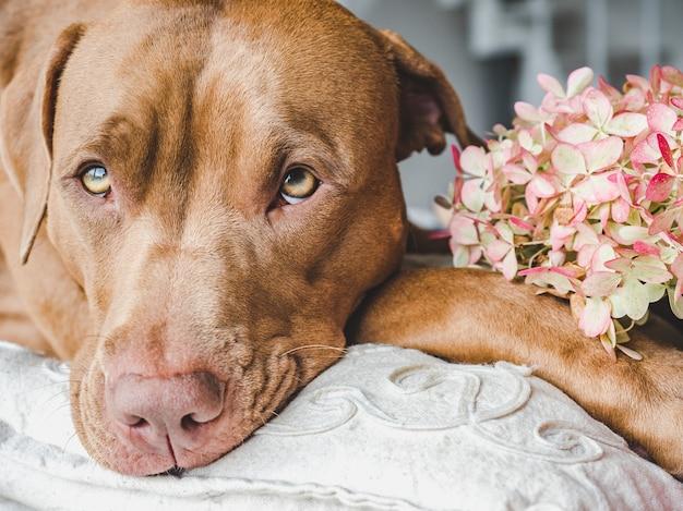 Piękny, jasny bukiet kwiatów i uroczy szczeniaczek. widok z boku, zbliżenie
