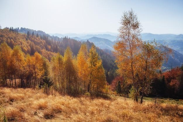 Piękny jesień czas górski w karpatach