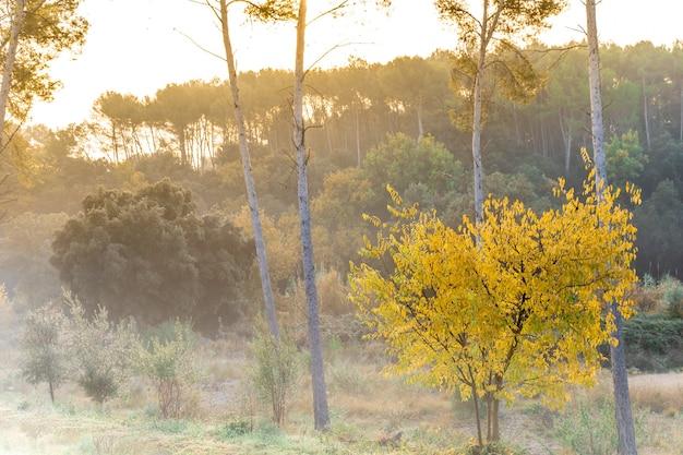 Piękny jesienny krajobraz górski z kolorowymi złotymi drzewami