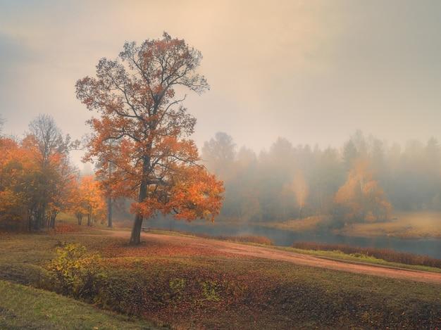 Piękny jesienny krajobraz mglisty z czerwonym drzewem na wzgórzu
