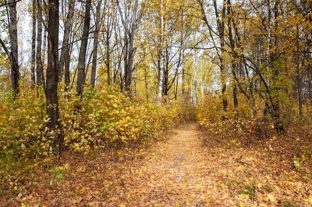 Piękny jesienny krajobraz. ścieżka przez las z żółtymi liśćmi