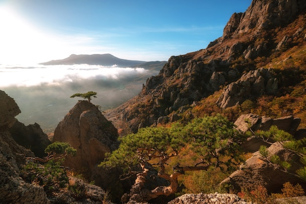 Piękny jesienny krajobraz w górach. drzewo na skale na tle mgły w górach. krym, góra demerdzhi.