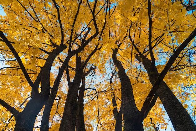 Piękny jesienny krajobraz z żółtymi drzewami, zielenią, słońcem i niebieskim niebem.