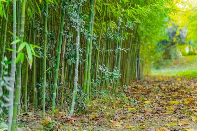 Piękny jesienny krajobraz ze złotym tłem drzew