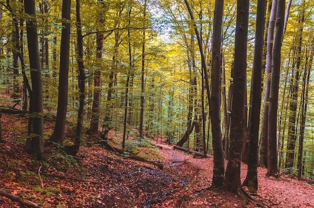 Piękny jesienny las w górzystym terenie