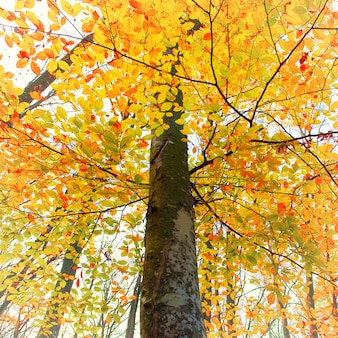 Piękny jesienny las w parku z żółtymi i czerwonymi drzewami