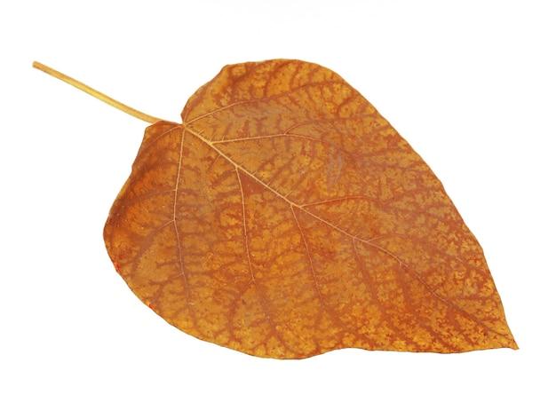 Piękny jesienny liść, na białym tle
