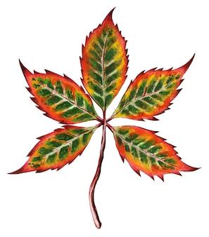 Piękny jesienny liść z czerwonymi, zielonymi, żółtymi i pomarańczowymi kolorami ilustracja aspen