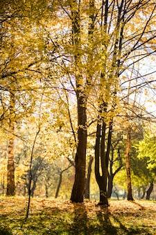 Piękny jesienny park. jesienne drzewa i liście. jesienny krajobraz. park jesienią. las jesienią.