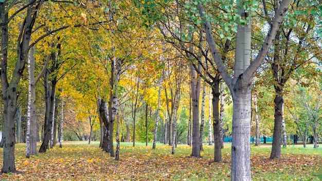 Piękny jesienny park w mińsku na białorusi.
