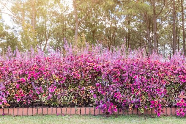 Piękny kącik małego ogrodu z kwiatami, ogrodnictwo dekoracji i krajobrazu