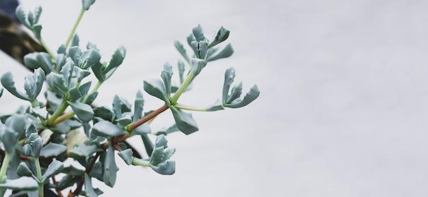 Piękny kaktus kaktusy sukulenty transparent z miejsca na kopię. rośliny zielone.