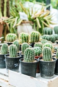 Piękny kaktus w doniczce