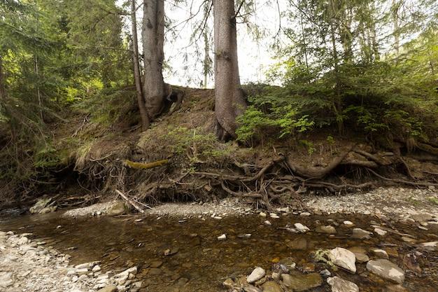 Piękny kawałek lasu w świetle dziennym