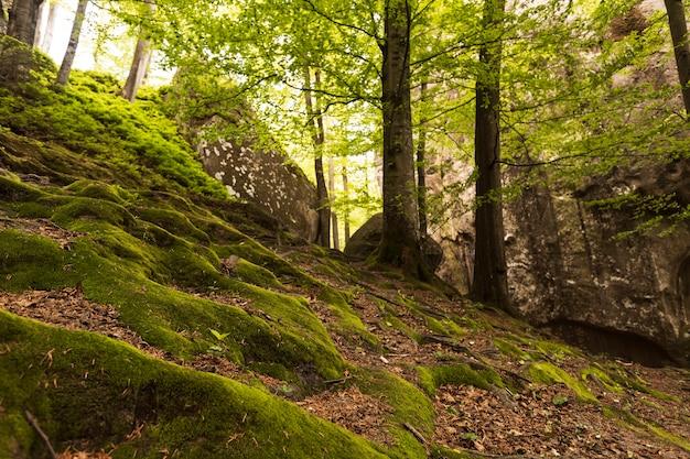 Piękny kawałek natury w świetle dziennym