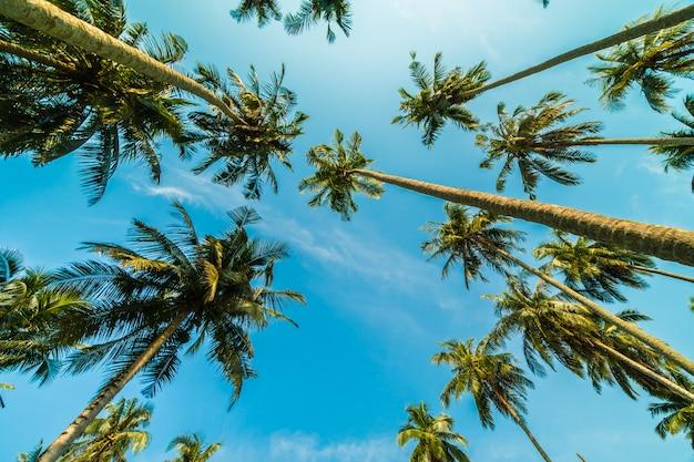 Piękny kokosowy drzewko palmowe na niebieskim niebie
