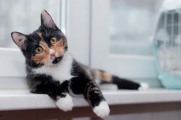 Piękny kolorowy kot siedzi na parapecie