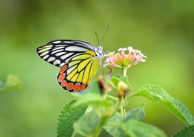 Piękny kolorowy motyl