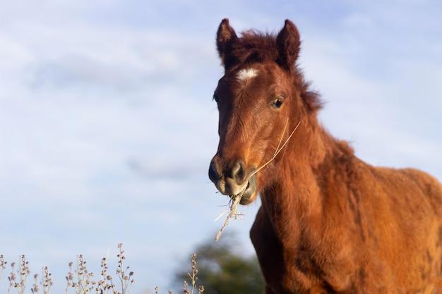 Piękny koń jedzący na zewnątrz