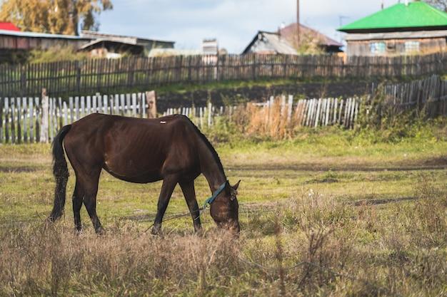Piękny koń na tle wiejskich domów. koń we wsi pasący się na podwórku.