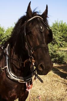 Piękny koń na zewnątrz letni dzień