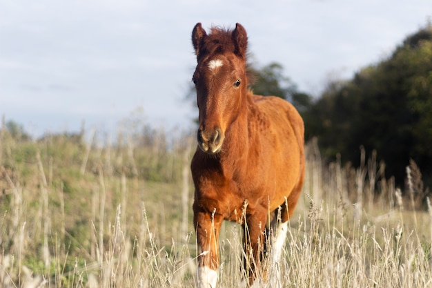 Piękny koń na zewnątrz