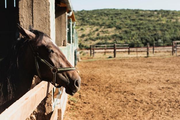 Piękny koń stojący z głową na zewnątrz stajni
