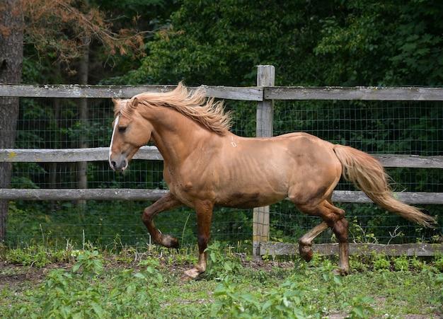 Piękny koń uprząż bawi się na łonie natury