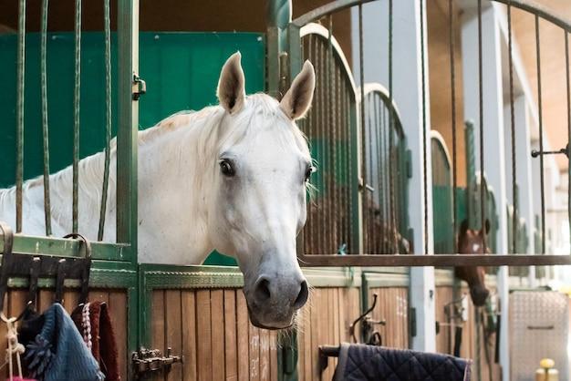 Piękny koń z drużyną na ranczo. hipodrom przygotowuje się do wyścigu. wspaniałe zwierzę w słońcu. pojęcie sportu, kocham świat zwierząt.