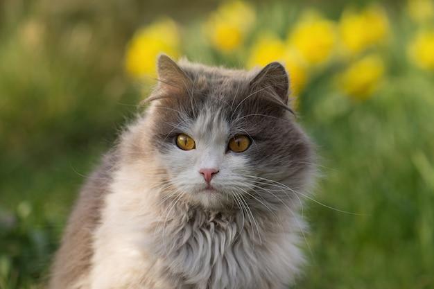 Piękny kot i kwitnące rośliny w ogrodzie. mały śmieszny kot siedzi na zewnątrz.