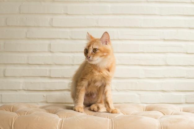 Piękny Kot Leżący Na Pomarańczowej Kanapie Premium Zdjęcia