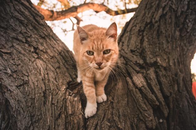 Piękny kot na drzewie