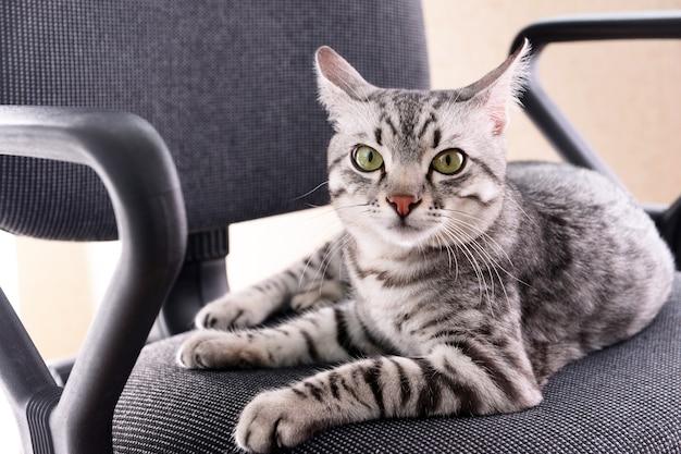Piękny kot na krześle z bliska