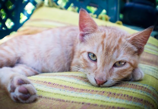 Piękny kot relaksujący na poduszce