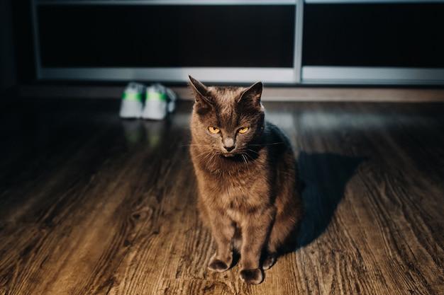 Piękny kot siedzi w domu i odpoczywa
