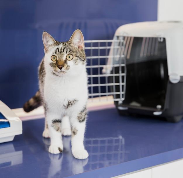 Piękny kot z klatką w klinice weterynaryjnej