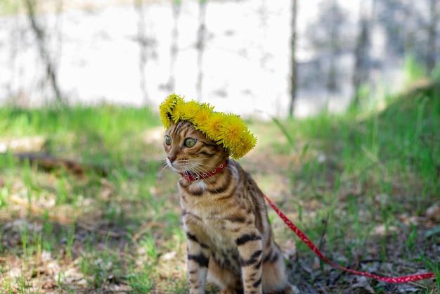 Piękny kotek bengalski z wieńcem żółtych kwiatów na głowie