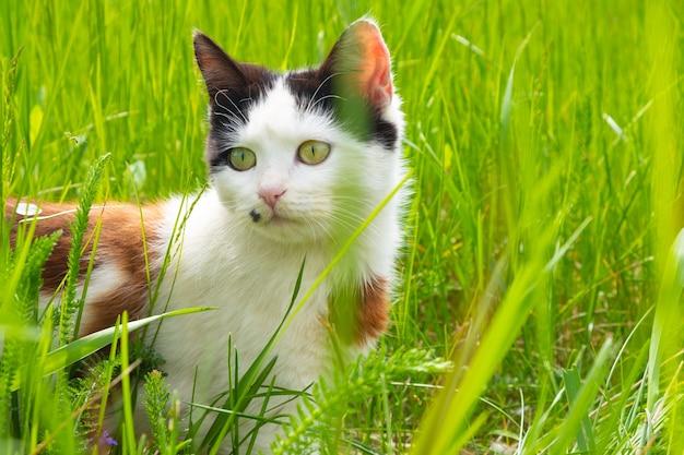 Piękny kotek w zielonej trawie