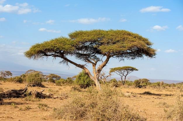 Piękny krajobraz bez drzewa w afryce