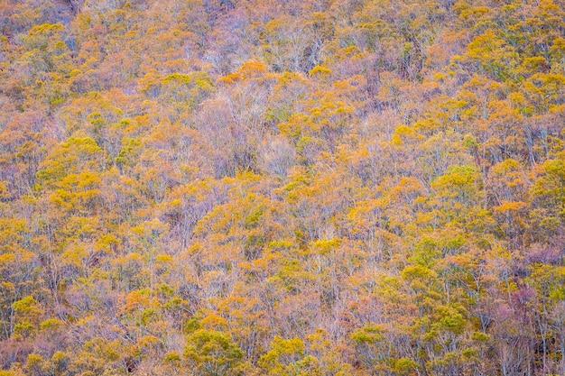 Piękny krajobraz dużo drzewa z kolorowych liści wokół góry