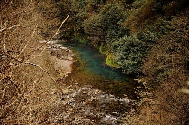Piękny krajobraz dzikiej górskiej błękitnej rzeki wśród suchych i zielonych drzew w georgii