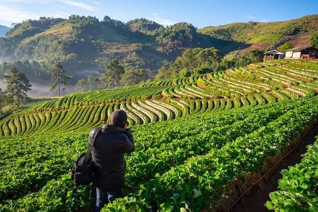 Piękny krajobraz farmy truskawek ban no lae z morzem mgły, zielonym drzewem, niebieską górą i wiązką światła słonecznego rano w doi ang khang, chiangmai, tajlandia