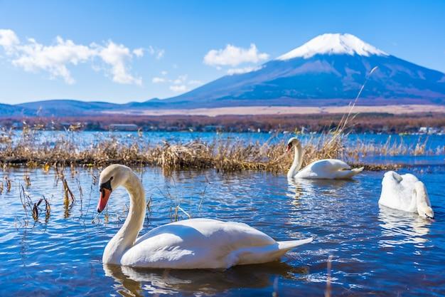 Piękny krajobraz halny fuji wokoło yamanakako jeziora