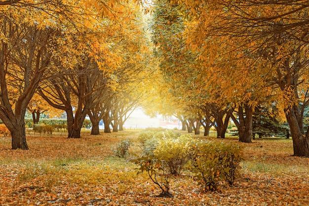 Piękny krajobraz jesienią. żółta i zielona wierzba.