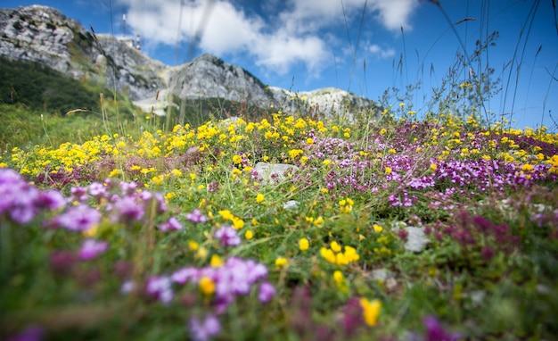 Piękny krajobraz kolorowych kwiatów rosnących na wysokiej górze