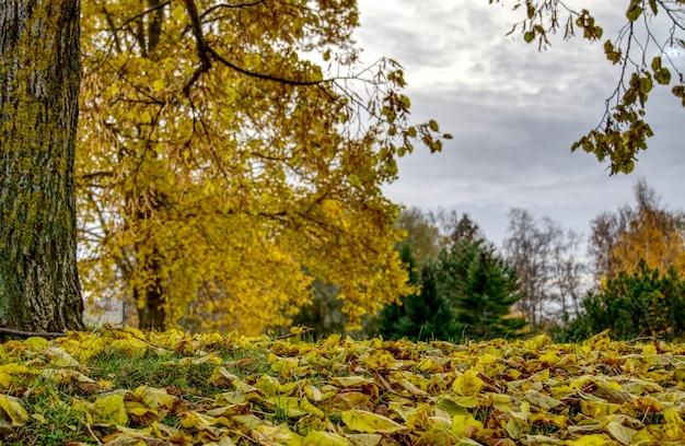 Piękny krajobraz lasu jesienią