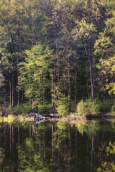 Piękny krajobraz lasu z jeziorem