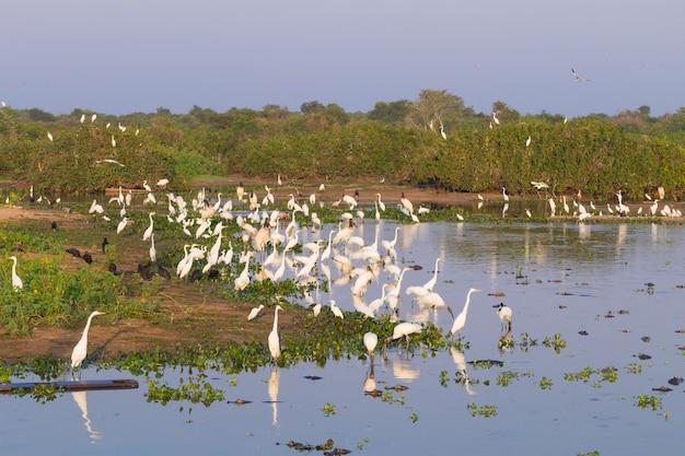 Piękny krajobraz pantanal, ameryka południowa, brazylia. przyroda i przyroda wzdłuż słynnej polnej drogi transpantaneira.