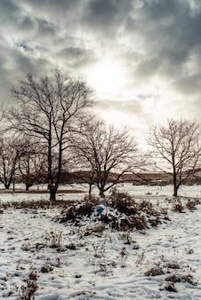 Piękny krajobraz pokryty śniegiem i drzewami pod zachmurzonym niebem