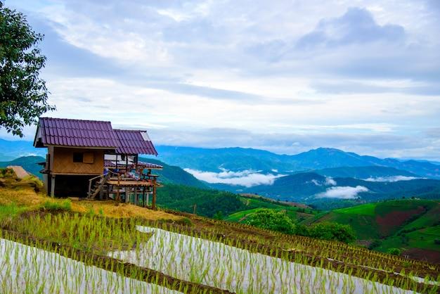 Piękny krajobraz pól ryżowych na tarasie ban pa bong piang w sezonie sadzenia, chiangmai, tajlandia